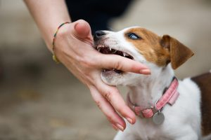 Training Methods For How To Stop A Puppy From Biting Problems